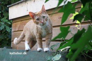 Kat i haven